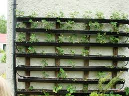 Strawberry Garden Beds Kiv Community U2022 View Topic Raised Garden Beds