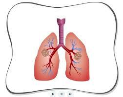 Google Human Anatomy 85 Best Human Anatomy Images On Pinterest Human Anatomy Health