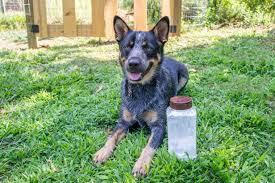 Make Bathtime Fun For Your Dog How To Make Dry Dog Shampoo Diy Network Blog Made Remade Diy