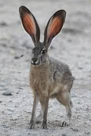 California wild animals images 137 best california wildlife images wildlife jpg