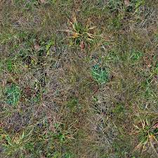forest ground textures grass 5 png opengameart org