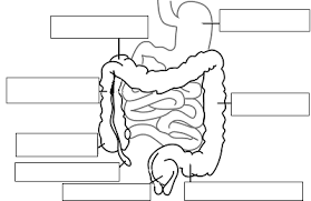 notes digestive system