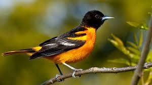 20 of the world u0027s most colorful birds u2013 oddmenot