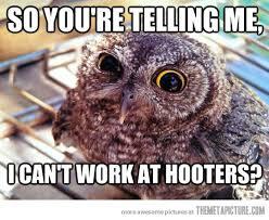 Job Hunting Meme - skeptical owl on job hunting the meta picture