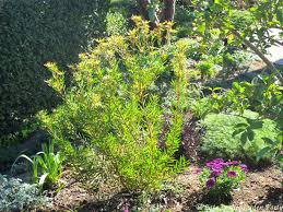 Our Favorite Plants How To by Late To The Garden Party My Favorite Plant Of The Week