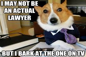 Dog Lawyer Meme - lawyer dog meme has a nose for justice