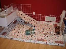 ma chambre a la forme d une cage parc d intérieur pour cochon d inde cochon d inde cobaye rongeur