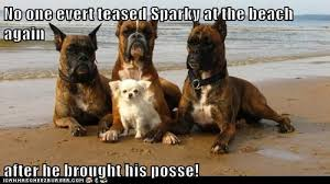 Funny Boxer Dog Memes - i has a hotdog posse funny dog pictures dog memes puppy