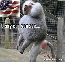 Baboon Meme - check out these canines did you know that the canine teeth of alvin