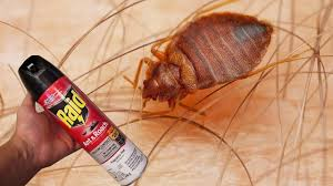 Killing Bed Bugs In Clothes Instant Rid Of Bed Bugs Found Out Myself Raid Ant U0026 Roach Works