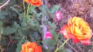 rare flowers of india youtube