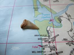 shark tooth on fisher beach in truro cape cod cape cod bay side