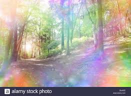 woodland path and light shining through trees with a fantasy