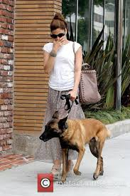 k lin belgian sheepdogs eva mendes walking her dog in beverly hills 11 pictures