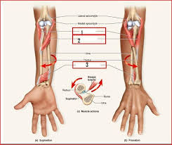 Human Anatomy Terminology 143 Best Medical Anatomy Terminology Reference Material Images On