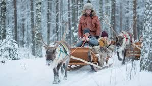 reindeer sleigh rides rovaniemi lapland santa claus reindeer