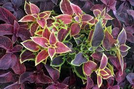 closeup leaves of ornamental plants in the late summer stock