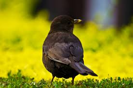 rspb big garden birdwatch 2017 5 reasons to join in register