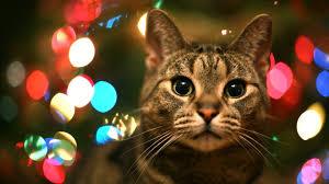 cat christmas tabby cat city lights wallpaper 44111 1920x1080 px hdwallsource