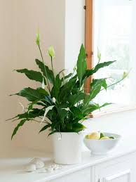 Plant For Bedroom Best 25 Low Light Plants Ideas On Pinterest Indoor Plants Low