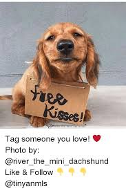 Dachshund Meme - ree tag someone you love photo by like follow