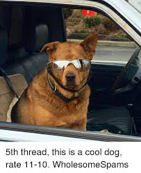 Cool Dog Meme - 5th thread this is a cool dog rate 11 10 wholesomespams meme on me me