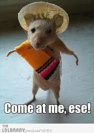 Rat Meme - mexican rat meme by poundz memedroid