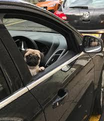 Pet Ready Exterior Doors by Pugs