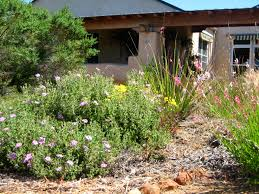 california native plants landscaping landscape design professional landscape design xeriscape design a1