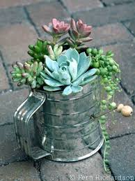 planter for succulents shallow planter for succulents succulents in a saucer shallow