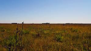 iowa native plant society mcgovern to lead tour of kossuth county prairies iowa natural
