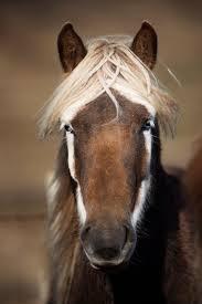 horse head mask idolza