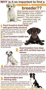 australian shepherd puppies under 500 aussie info