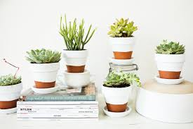 cute succulent pots painted pots succulents offbeat inspired