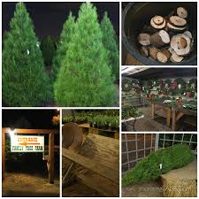family christmas tree farm christmas lights decoration