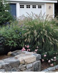 All Year Flowering Shrubs - the best plants for sunny borders fine gardening