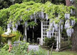 how to build a trellis of wisteria hunker