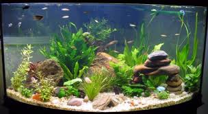 Fish Tank Decorations a Fish s Perspective Useful Information