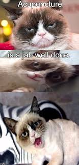 Acupuncture Meme - bad pun grumpy cat imgflip