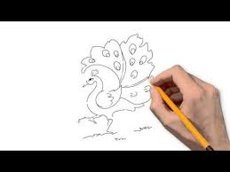 peacock animals pencil to draw step by step youtube