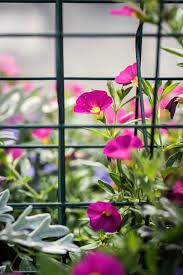 amy dixon rooftop garden at brenner children u0027s hospital offers