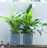 plante verte dans une chambre quelle plante verte pour quelle pièce de la maison femmes d
