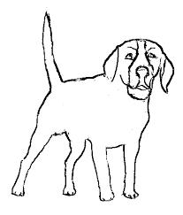 imagenes de animales carnivoros para imprimir dibujos para colorear de animales herbivoros y carnivoros ideas