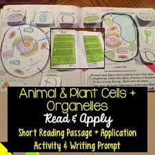 animal and plant cells organelles reading comprehension