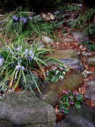 australian native shade plants 2012 winter interest plants carolyn u0027s shade gardens