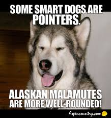 Cool Dog Meme - easygoing dog meme some dogs are pointers alaskan malamutes are