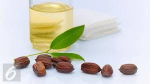 Minyak Jojoba Mustika Ratu jojoba minyak alami dengan sejuta manfaat untuk kulit