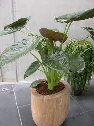 plantes pour bureau louez ou achetez des plantes de bureau chez any green