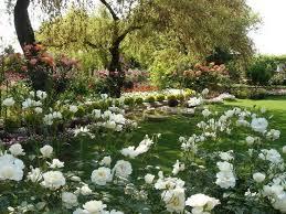 38 best roses images on pinterest roses garden garden roses and