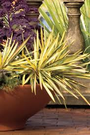 15 tips for great winter pots southern living